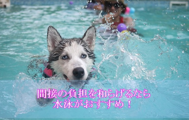 犬-ダイエット-間接の負担-和らげる-水泳-おすすめ