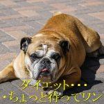 犬-ダイエット-注意点-過度な運動や食事制限