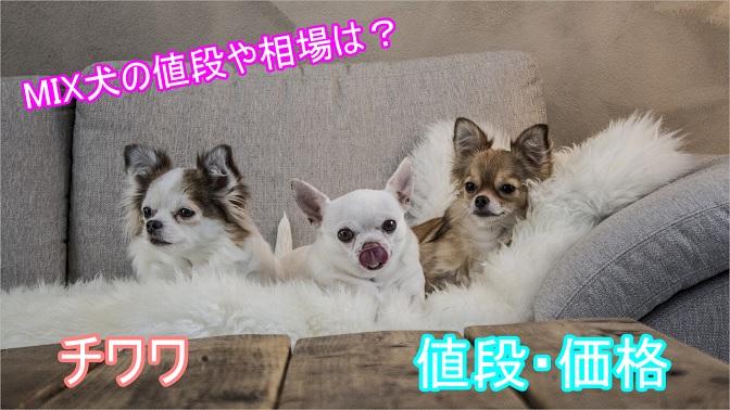 チワワ-ミックス犬-値段-価格-相場