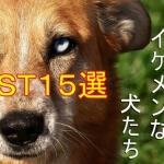 かっこいい-イケメン-犬種-ランキング