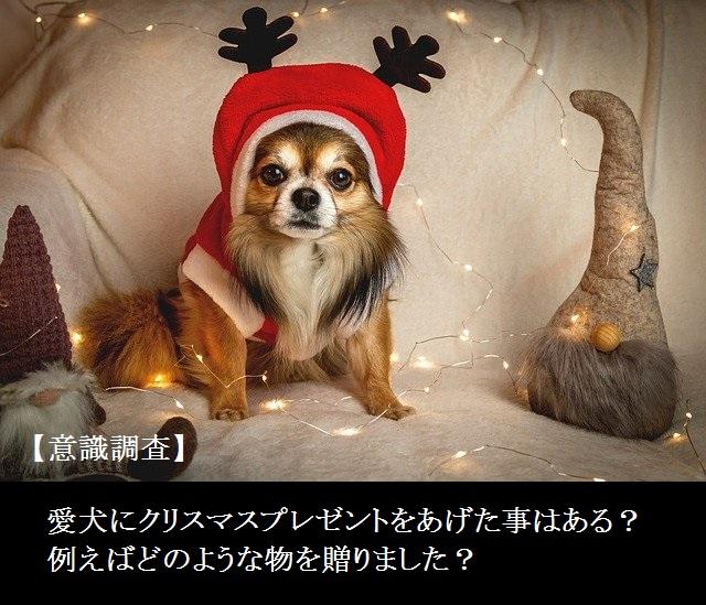 【意識調査】愛犬にクリスマスプレゼントをあげた事はある?どのような物を贈ったの?