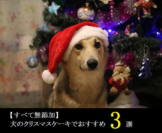 【すべて無添加】犬のクリスマスケーキでおすすめ3選